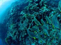 rafa koralowa underwater Fotografia Stock