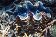 rafa koralowa underwater Zdjęcie Royalty Free