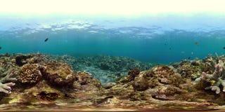 Rafa koralowa vr360 i tropikalna ryba zbiory wideo