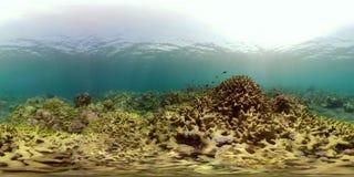 Rafa koralowa vr360 i tropikalna ryba zbiory