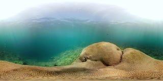 Rafa koralowa vr360 i tropikalna ryba zdjęcie wideo
