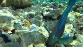 Rafa koralowa w Egipt 1 zbiory wideo