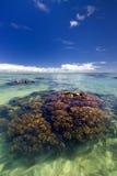 Rafa koralowa w płytkiej tropikalnej wodnej lagunie. Obrazy Stock