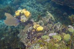 Rafa koralowa wychód Fotografia Royalty Free