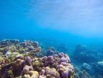 Rafa koralowa z światło słoneczne promieniem w błękitne wody Tropikalnego seashore podwodna fotografia obrazy stock
