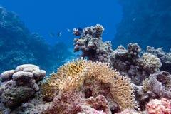 Rafa koralowa z mocno i pożarniczy koral przy dnem tropikalny morze Zdjęcia Stock