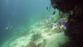 Rafa koralowa z rybi podwodnym Camiguin, Filipiny zdjęcie wideo