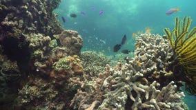 Rafa koralowa z rybi podwodnym Camiguin, Filipiny zbiory
