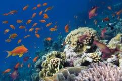 Rafa z różnorodność ciężkimi i miękkimi koralami Zdjęcia Stock