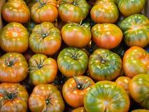 Raff tomater royaltyfri fotografi