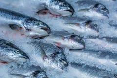 Raffreddato nel pesce rosso del ghiaccio fotografia stock