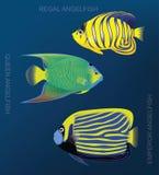 Rafowego Angelfish kreskówki wektoru Ustalona ilustracja royalty ilustracja