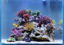 Rafowy akwarium Zdjęcie Royalty Free