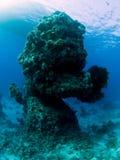 rafowy Donald underwater Zdjęcie Stock