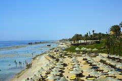 rafowy Egypt podpalany plażowy rekin obraz royalty free