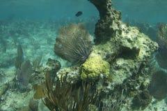 rafowy fan morze Obraz Royalty Free