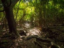 Rafowy Podpalany ślad, St John, U S Dziewiczych wysp park narodowy Zdjęcia Stock