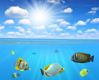 rafowy tropikalnych ryb Zdjęcie Royalty Free