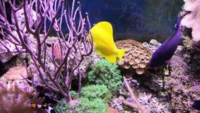 Rafowy zbiornik wypełniający z wodą dla utrzymywać żywych podwodnych zwierzęta Clownfish, aktyny i Denny kwiat zbiory