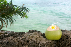 Rafraîchissement tropical de noix de coco photo stock