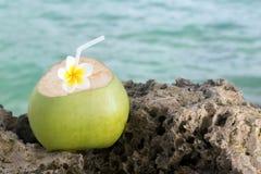 Rafraîchissement tropical de noix de coco photos libres de droits
