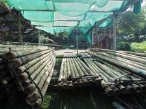 Rafting di bambù nel paesaggio tropicale verde come giro per il turista in Mae Wang District Chiang Mai Thailand immagini stock
