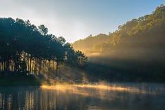 Rafting di bambù sul fiume con luce solare Fotografia Stock