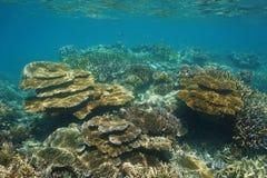 Rafy koralowa Caledonia Nowy podwodny Pacyficzny ocean Obrazy Stock