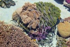 Rafy Koralowa scena Zdjęcie Stock