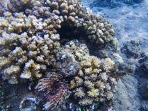 Rafy koralowa tekstura Egzotyczna wyspa brzeg płytka woda Tropikalnego seashore krajobrazu podwodna fotografia Obraz Royalty Free