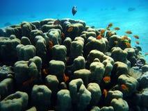 rafy koralowe Obraz Stock