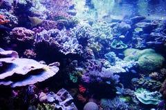 rafy koralowe zdjęcia royalty free
