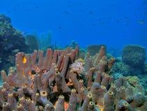 rafy koralowe Obrazy Stock