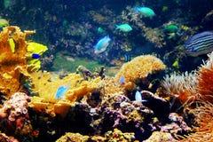 rafy koralowe zdjęcie stock