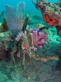 rafy koralowe Obraz Royalty Free