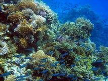 rafy koralowe Zdjęcia Stock