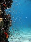 rafy koralowe na scenie Obraz Royalty Free