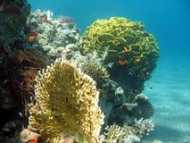 rafy koralowe na scenie Obrazy Royalty Free