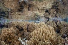 rafy koralowe piękna zdjęcie stock