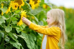 Ragazza adorabile che gioca nel giacimento di fioritura del girasole il bello giorno di estate Fotografie Stock