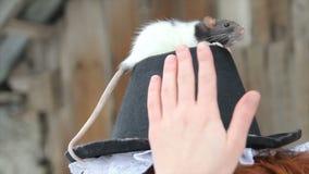 Ragazza adorabile con il ratto domestico sveglio sul cappello video d archivio