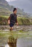 Ragazza agricola cinese che cammina a piedi nudi attraverso il fango delle risaie Fotografia Stock
