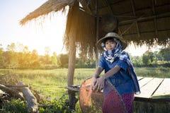 Ragazza asiatica dell'agricoltore che lavora al giacimento del riso sulla stagione del raccolto Immagine Stock Libera da Diritti