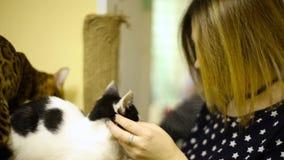 Ragazza asiatica della donna che segna i gatti di tocchi video d archivio