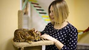 Ragazza asiatica della donna che segna un gatto marrone, sorridente archivi video