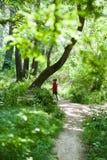 Ragazza, bambino, rete, stile di vita, estate, foresta, insetti, gioia, ambiente, natura Fotografie Stock Libere da Diritti