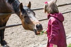 Ragazza che alimenta un cavallo Fotografia Stock