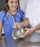 Ragazza che ascolta Rabbit& x27; battito cardiaco di s con lo stetoscopio da medico Immagini Stock Libere da Diritti