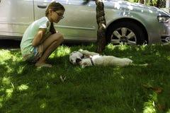 Ragazza che guarda due cuccioli bianchi giocare sull'erba verde in un parco all'aperto fotografia stock