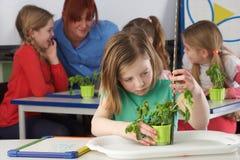 Ragazza che impara circa le piante nel codice categoria di banco immagine stock libera da diritti